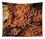 Turkey Tail Mushrooms  Tapestry