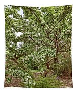 Twisted Privet Tapestry