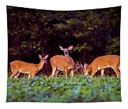 Two Doe And One Buck Tapestry