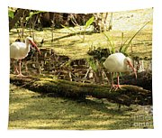 Two Ibises On A Log Tapestry