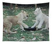 Two Lion Cubs Playing Tapestry