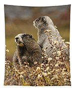 Two Marmots Tapestry