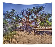 Utah Juniper On The Climb To Delicate Arch Arches National Park Tapestry