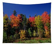 View In The Appalachian Mountains Tapestry