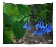Virginia Bluebells In The Early Morning Tapestry