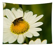 Wasp On Daisy Tapestry