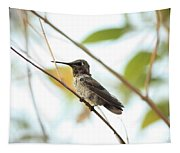 Watchful Hummingbird Tapestry