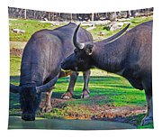 Watching 2 Water Buffalos 1 Water Buffalo Watching Me Tapestry