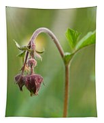 Water Avens Tapestry