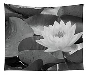 Water Lily - Burnin' Love 13 - Bw Tapestry