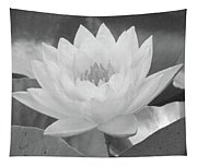Water Lily - Burnin' Love 15 - Bw - Water Paper Tapestry