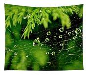 Water Orbs In Cobweb. Tapestry
