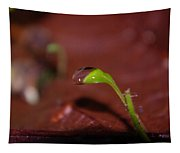 Waterdrop On A Litte Green Sprout  Tapestry