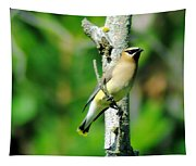 Wax Wing In A Small Branch  Tapestry