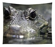 West African Dwarf Crocodile - Captive 03 Tapestry