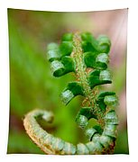 Western Swordfern Three Tapestry