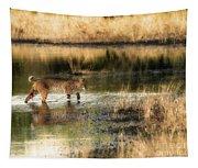 Wet Bob Cat  Tapestry