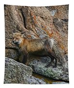 Wet Vixen On The Rocks Tapestry by Perspective Imagery
