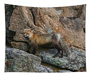 Wet Vixen On The Rocks Tapestry