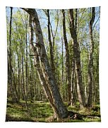 White Birch Forest Tapestry