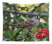 White Crowned Sparrow 1 Tapestry