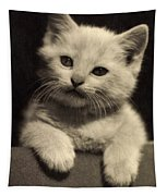 White Fluffy Kitten Tapestry