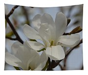 White Magnolia Blooming In Spring Tapestry