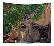 White-tailed Deer H1829 Tapestry