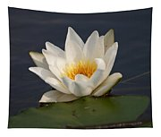 White Waterlily 1 Tapestry