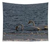 Whooper Swan Nr 2 Tapestry