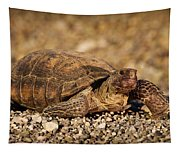 Wild Desert Tortoise Saguaro National Park Tapestry