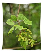Wild Grapes 1992 Tapestry