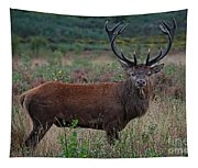 Wild Red Deer Stag Tapestry