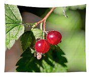 Wild Red Goosberries Tapestry