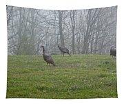 Wild Turkey Grazing At Dawn Tapestry