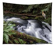 Wilson Creek #18 With Added Cedar Waxwing Tapestry