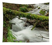 Winding Creek With A Mossy Log Tapestry