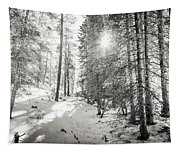 Winter Sunshine Forest Shades Of Gray Tapestry