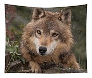 Wolf Face Tapestry