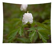 Wood Anemone Heavy From The Rain Tapestry