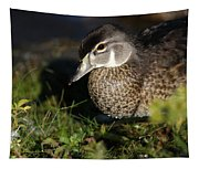 Wood Duck Female Tapestry