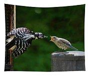 Woodpecker Feeding Bluebird Tapestry