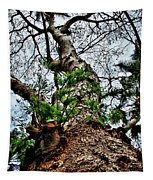 Ye Ole Tree At Chichen Itza Tapestry