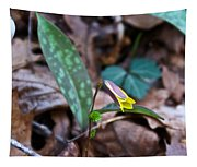 Yelllow Trout Lily 1 Tapestry