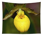 Yellow Lady's Slipper 3 Tapestry