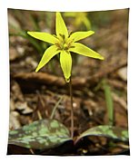 Yellow Trout Lily 1 Tapestry