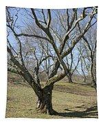 Yellowwood Tree In Winter Tapestry