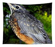 Young American Robin Tapestry