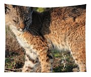 Young Bobcat 01 Tapestry