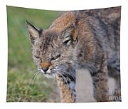 Young Bobcat 03 Tapestry